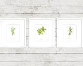 Set of 3 | Herb Print | (Mint, Rosemary + Thyme)