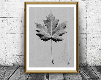 Maple Leaf Print, Nature Photo, Minimal Poster, Maple Tree, Autumn Leaf, Black and White Home Decor, Canada Symbol, Printable Art
