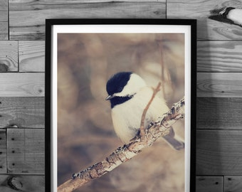 Black Chickadee photography, Winter, Nature photography, art print, instant download, wall art, decor print, printable art, canada