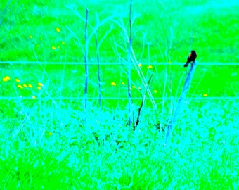 bird in a field of green