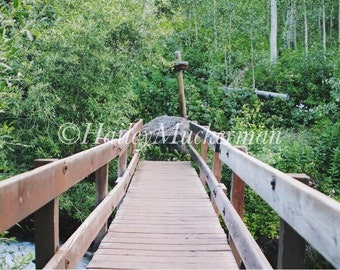 Canvas photography art, forest bridge, path, walkway