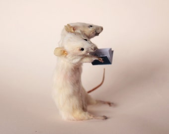 two headed science mouse