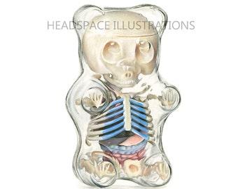 Gummybear Anatomy - Colored Pencil Art Print by Headspace Illustrations