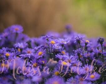 Premium Fine Art Print - Warm Purples V2