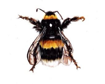 Beautiful Bumblebee 5