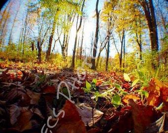 Fall & Fisheye