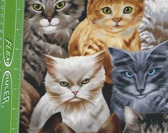Cat/ Kittens alloverTimeless treasures