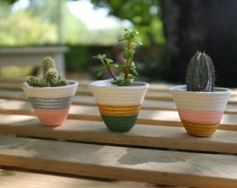 3 Cactus Pots Pink, Green, Silver, Gold