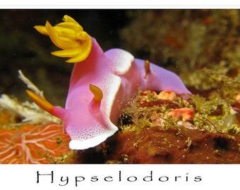 Greeting Card, Underwater Image, Hypselodoris