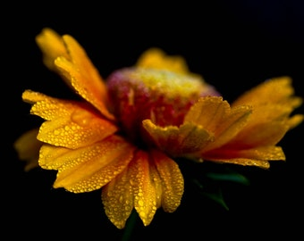Yellow Flower, Macro Photography, Nature Photography, Flower Print