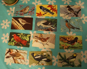 Vintage Bird watching Cards