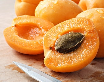 Free Shipping! 5 Apricot (Prunus armeniaca) -tree seeds - Delicious fruit!Easy to plant!!