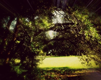 Nature Trees Landscape Photography #2 *In Color*
