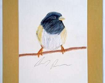 Dark-Eyed Junco Colored Pencil Drawing