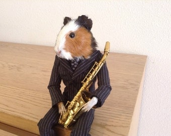 Taxidermy pig true of India Guinea pig saxophonist odditie taxidermy cabinet of curiosities