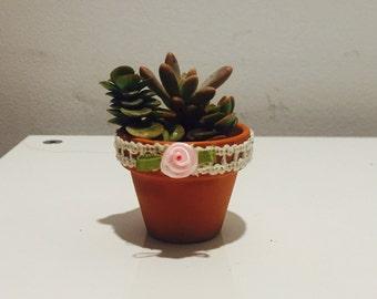 Baby Succulent favors