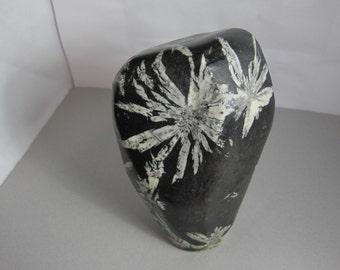 Chrysanthemum Stone / Chrysanthemum Crystal / Chrysanthemum Rock / Specimen / Honme Decor