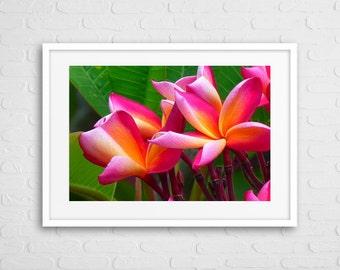 Frangipani Flowers art photo with frame