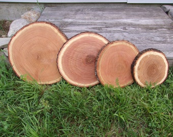 "1 Pc 13"" to 14"" Oak Log Slices Wood Disk Rustic Wedding Centerpiece Coaster"