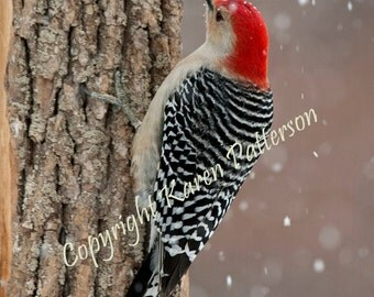 Red bellied woodpecker perched on tree trunk during winter snowfall