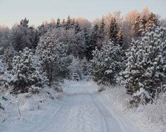 Winter nature nordic snow photography instant download