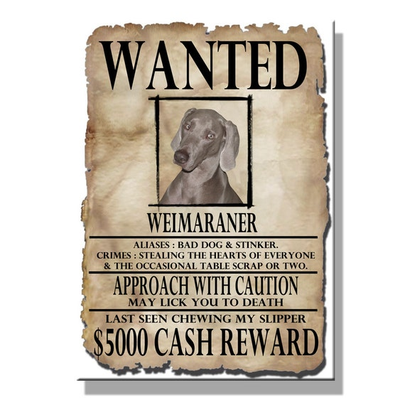 Weimaraner Wanted Poster Fridge Magnet