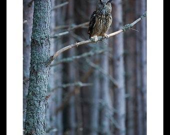 Eurasian Eagle Owl - instant digital download - printable art - birds