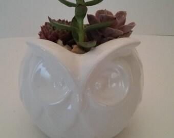 Ceramic White Owl Succulent Planter