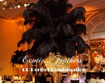 50 Pcs. Black Ostrich Feathers 15/18 inches. Premium Quality Absolutely Beautiful Lucious. The 'Black Swan' Collection By ExoticfeathersLA