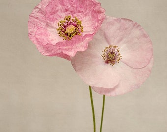 Pink Poppy Flower Photography Print, Girls Room, Wall Decor, Flower Wall Art, Pink Poppies, Floral, Home Decor, Fine Art Photography Print