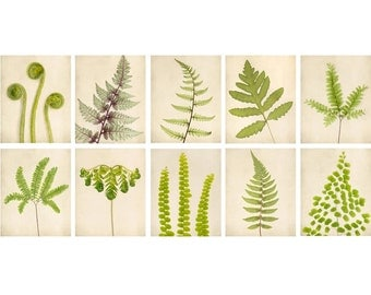 Botanical Print Set, Fern Art, Set of Prints, Living Room Art, Woodland, Forest, Nature, Wall Art, Green, Fine Art Photography
