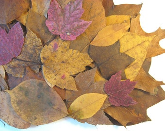 Fall Leaves Dried, 50 or More Real Pressed Leaves, Red Gold Brown Leaves, Fall Wedding Table Scatter, DIY Table Card or Autumn Crafts Supply