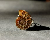 Ammonite fossil sterling silver ring Size 8