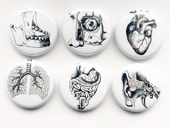 Medical doctor gift teacher Human Anatomy Magnets button pins eye anatomic eye ear geekery stocking stuffer lung body party favor goth decor