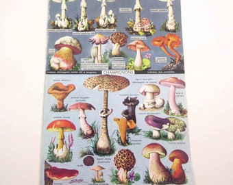 Gorgeous Color Book Plate of Mushrooms and Medals with French Descriptions