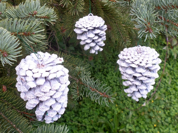 White pine cone ornaments set of 3 ornaments hanging pine for Large christmas pine cones