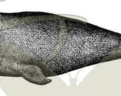 Whale Digital Vintage Printable Clip Art Image Download Illustration Animal Graphic 193