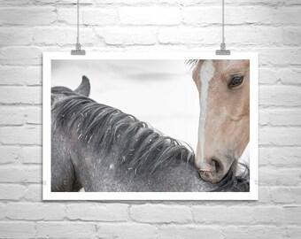 Horse Print, Horse Photography, Horse Picture, Equestrian Art, Equine Art, Ranch Horses, Animal Art, Wall Print, Wall Picture, MurrayBolesta