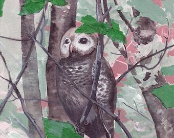 "Young Barred Owl - bird art print, 6"" x 6""."