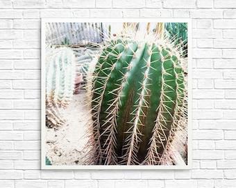 California Photography, Cactus Photography, Palm Springs Photography, Cactus Garden, Cactus, Green, Home Decor, Desert Photo - Cactus Love 2