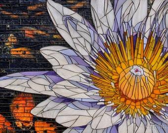 Water Lily 16x20 - Matted Giclée Fine Art Print