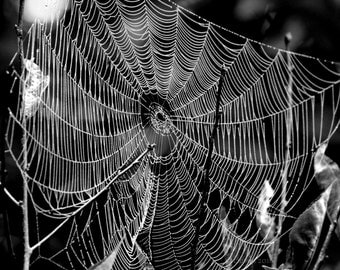 "Nature Photography, Spiderweb, Morning Dew, Black and White Photography, 6x9 or 8x12. ""Bewebbed - B&W No.1""."