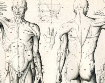 1852 Antique Anatomy Print  - Graphic Arts - Drawing - Heads - Hands - Body - Gift for Him - Plate 20