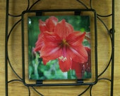 Amaryllis Flower Glass Tile Trivet, Hot Food Trivet, Nature Photography, Red Amaryllis Flower, Glass Tile