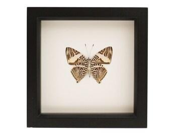 Butterfly Art Mosaic Butterfly Colubra dirce