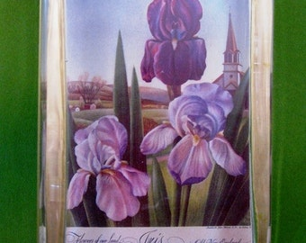 """Purple Spring Home Decor """"Iris in Old New England"""" Flower Calender Painting Large Rectangle Glass Paperweight"""