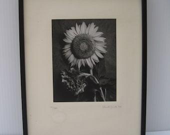 Vintage 1994 Fine Art Photograph Framed Sunflower Black and White
