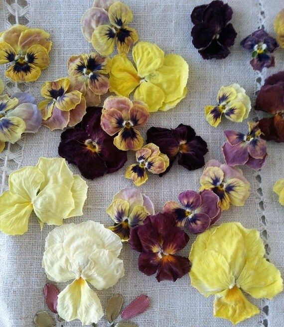 Dry pansies dry flowers centerpiece flower girl favor for Dried flowers craft supplies