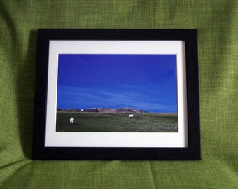 Framed photo - sheep on Isle of Iona with bright blue sky