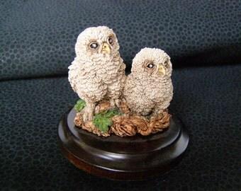 Miniature Barn Owlets, Stratford-Upon-Avon, England
